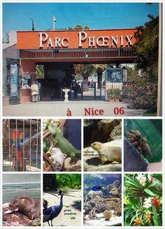 le Parc Phoenix est situé sur la promenade des Anglais à Nice. Dans sa grande serre: des orchidées , les plantes tropicales et  des plantes grasses ainsi que les poissons et autres animaux.  Dans le jardin ,  les perroquets, les loutres, les pélicans, les hiboux...