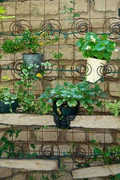 Upcycling, old mattress springs for a vertical garden trellis!