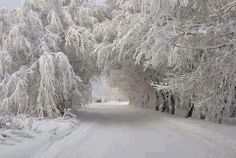 Harbor Springs, Michigan. The Tunnel of Trees off M-119. The snow & ice makes everything so pretty & glittery.