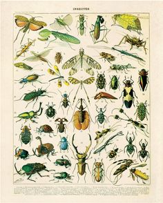 Insects Diagram Vintage Reproduction Print. by curiousprints