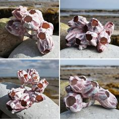 Clustering together in highly delicate and intricate structures of pinks and purples barnacles make quite beautiful displays. View our complete range of beach sea shells in store. Clay Projects, Diy Craft Projects, Artificial Coral, Clay Cup, Sea Crafts, Paper Crafts, How To Make Clay, Seaside Decor, Water Balloons