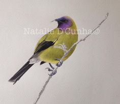 BellBird New Zealand Art, Wild Life, Artists, Bird, Animals, Animales, Animaux, Birds, Wildlife Nature
