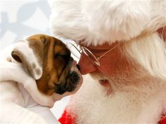 Send us photos of your pets with Santa! http://on.today.com/VFenq6     (Richard W. Rodriguez / AP)