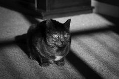 #mine #cat #blackandwhite