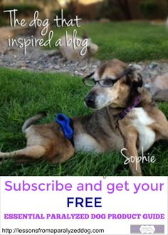 Lessons From A Paralyzed Dog is a blog about  resources to make life better for dogs and cats with disabilities.