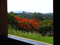 GILBERTO ELKIS PAISAGISMO- www.gilbertoelkis... São Paulo- Brasil/ Fazenda em Alfenas- Minas Gerais- Brasil