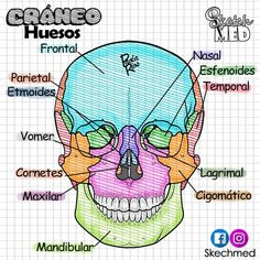 Anatomia Y Fisiologia Humana Anatomia y fisiologia humana storage organization for relations - Storage And Organization Medicine Notes, Medicine Book, Med Student, Nursing School Notes, Science Notes, Human Anatomy And Physiology, Human Body Anatomy, Medical Anatomy, School Study Tips