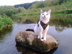 What kind of harness does your cat need? – Adventure Cats