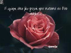Poems, Wisdom, Love, Quotes, Flowers, Plants, Amor, Qoutes, Dating