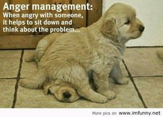 Anger management is a serious issue in the animal community.