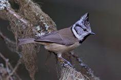 Bird Houses, Finland, Baby Animals, Natural Beauty, Scenery, Birds, Nature, Friends, Beautiful