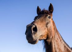 Rancheros close encounters with animals © Sonia Farasopoulou Close Encounters, Ranch, Greek, Horses, Animals, Guest Ranch, Animales, Animaux, Greek Language