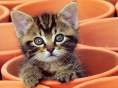 kitten in terra cotta flower pot