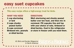Homemade Suet Cupcakes for birds. If you're wanting to attract a certain species mix their seeds of preference in. Bird Suet, Bird Seed Feeders, Bird House Feeder, Diy Bird Feeder, Squirrel Feeder, Homemade Bird Houses, Homemade Bird Feeders, Suet Recipe, Suet Cakes