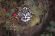 Tanja Brandt owl buho7