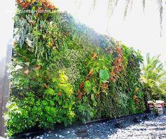 Jardin vertical de ccostado en el restaurant de Roberto Cavalli Ibiza