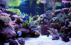 Como Fazer um Aquário em Casa #ocean #sea #mar #oceano #peixes #aquario #fish #aquarium #diy #doityourself #facavocemesmo