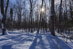 Late afternoon sun through the forest in winter Sundridge Ontario Canada  www.alamy.com/image-details-popup.asp?ARef=G15NR6 marketplace.500px.com/photos/154525487 #sun #forest #snow #landscape #winter #nature #light #cold #tree #season #sunlight #frost #background #scene #white #snowy #beautiful #outdoor #wood #scenery #branch #sunny #sunshine #beauty #scenic #day #frozen #blue #bright #view