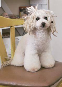 ショートドレッド --愛犬の友 ヘアスタイルカタログ--