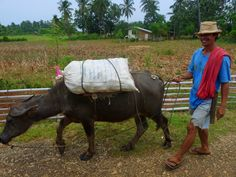 Farmer with his carabao, inland of Camotes.