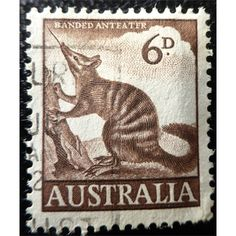 Australia, Animals, Banded Anteater, 6d brown 1959
