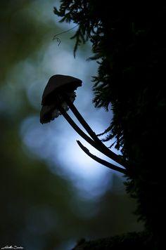 Mushroom by Eléments du temps on Flickr