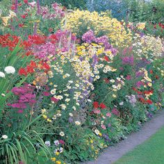 List of Perennial Flowers | List Of Perennial Flowers http://electricidadverde.cl/nmportal/list-of ...