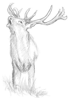 Animals draw basics- Animals draw b Animal Drawings, Pencil Drawings, Art Drawings, Animals Crossing, Amazing Animals, Art Inspiration Drawing, Drawing Techniques, Learn To Draw, Animal Photography