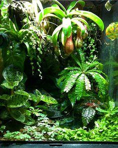 12x12x18 exo terra galactonotus dart frog vivarium bromeliad moss carnivorous plant monsoon solo
