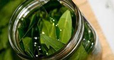 olio d oliva foglie di alloro
