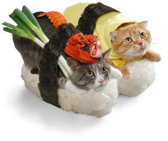 Nekozushi.com--Cats dressed up as sushi! Equal parts WTF and ZOMGSOCUTE.