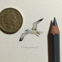 Seagull in flight. 28 x 23 mm.