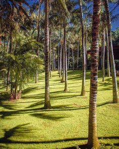 Loro parque. Puerto de la Cruz. Tenerife. Spain. #blue #green #palm #city #grass #colorful #color #sun #sunlight #zoo #landscape #sky #park #island #picoftheday #pic #photooftheday #spain #fauna #tenerife #island #sea #puertodelacruz #animal #rck #rckey #rckeyphoto