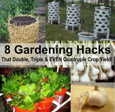 great ideas and tips for how to get more vegetables out of your garden- the key is to go vertical