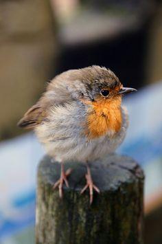 A little birdie told me…. by Frau Inga on Flickr.