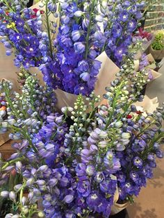 This weeks flower special! Beautiful long stem delphiniums...$25 per bunch