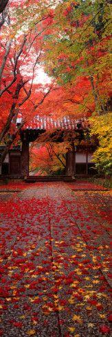 (Komyoji Temple) Kyoto Japan Photographic Print