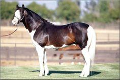 I love the paint horses