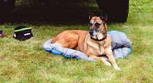 Travel Bed - 30in x 39in (76cm x 99cm) - Machine washable - Breathable for quick dry-out - Soft to the touch, quality construction - Must have for camping, car, RV, and home - Ideal for most size dogs - Stuff sack included - Colors may vary #travel #dog
