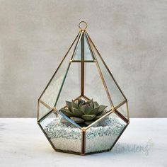 Indoor Plants Online, Buy Plants Online, Succulent Gifts, Anniversary Present, Birthday Treats, Beautiful Gifts, Planting Succulents, Design Your Own, Terrarium