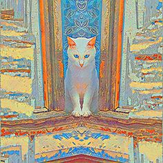 Symmetrical cat