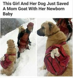 Faith In Humanity Restored - 9 Pics