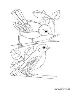 ptáci omalovánka - Hledat Googlem