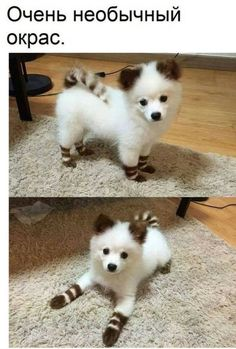 Cute Overload: Internet`s best cute dogs and cute cats are here. Aww pics and adorable animals. Baby Animals Pictures, Cute Animal Pictures, Animals And Pets, Wild Animals, Cute Little Animals, Cute Funny Animals, Little Dogs, Cute Puppies, Cute Dogs