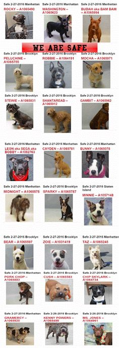2+28+safe+dogs.gif (257×750)  All safe