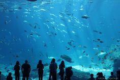 This is one HUGE fish tank! ATL Aquarium