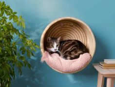 hanging cat basket with white and gray cat inside For the love of cats and kitties. cat basket with white and gray cat inside Cat Basket, Cat Room, Pet Furniture, Modern Cat Furniture, Furniture Companies, Furniture Stores, Grey Cats, White Kittens, Black Cats