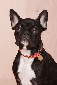 Found My Animal Lucky Dog Collar