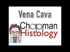 3 Min Histology Vena Cava - YouTube