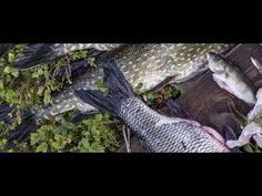Kalan reitti - YouTube